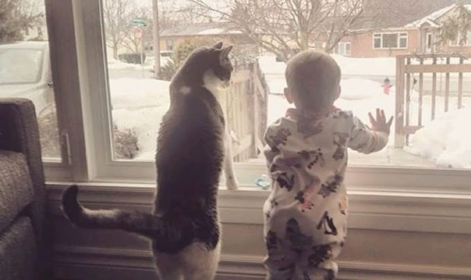 15 фотодоказательств того, что детям нужны котики